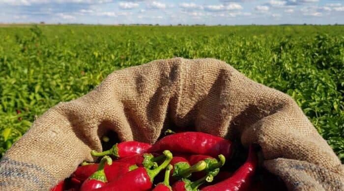Országos Versenyen Indult el a Fajszi Paprika Manufaktúra